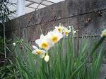 町で見かけた花シリーズ0718