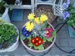 町で見かけた花シリーズ0719