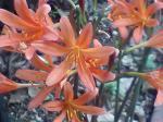 町で見かけた花シリーズ07222
