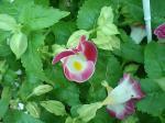 町で見かけた花シリーズ07272