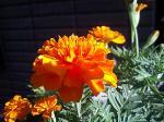 町で見かけた花シリーズ07281