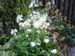 町で見かけた花シリーズ0729