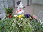 町で見かけた花シリーズ072
