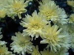 町で見かけた花シリーズ07301