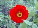 町で見かけた花シリーズ07320