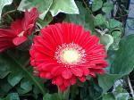 町で見かけた花シリーズ07330