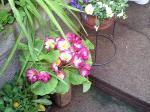 町で見かけた花シリーズ0733
