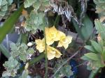 町で見かけた花シリーズ07363