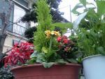町で見かけた花シリーズ07382
