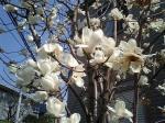 町で見かけた花シリーズ0754
