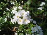 町で見かけた花シリーズ0759