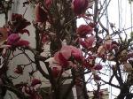 町で見かけた花シリーズ0769