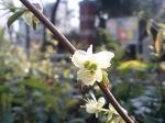 町で見かけた花シリーズ0774
