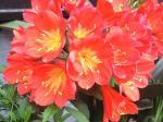 町で見かけた花シリーズ08118