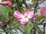 町で見かけた花シリーズ08123