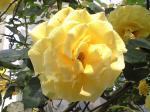 町で見かけた花シリーズ08143