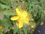 町で見かけた花シリーズ08158