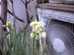 町で見かけた花シリーズ08015