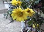 町で見かけた花シリーズ08018