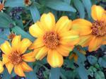 町で見かけた花シリーズ08192
