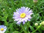 町で見かけた花シリーズ08201