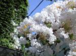 町で見かけた花シリーズ08213