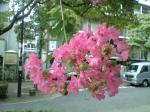 町で見かけた花シリーズ08221