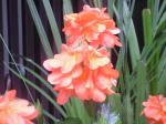 町で見かけた花シリーズ08222