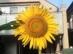 町で見かけた花シリーズ08228