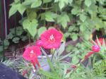 町で見かけた花シリーズ08230