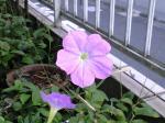 町で見かけた花シリーズ08234