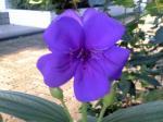 町で見かけた花シリーズ08246