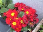 町で見かけた花シリーズ08040