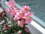 町で見かけた花シリーズ08050