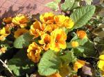 町で見かけた花シリーズ08056