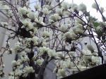 町で見かけた花シリーズ08080