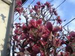 町で見かけた花シリーズ08089