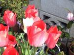 町で見かけた花シリーズ08094