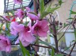 町で見かけた花シリーズ08097
