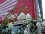 町で見かけた花シリーズ08099
