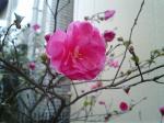 町で見かけた花シリーズ124