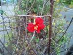 町で見かけた花シリーズ127