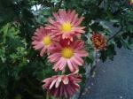 町で見かけた花シリーズ136