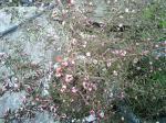 町で見かけた花シリーズ138