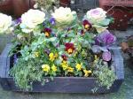 町で見かけた花シリーズ162