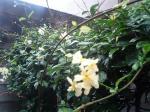 町で見かけた花シリーズ45