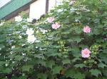 町で見かけた花シリーズ55