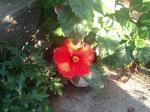 町で見かけた花シリーズ82