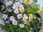町で見かけた花シリーズ99