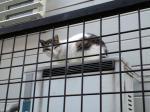 猫0702051